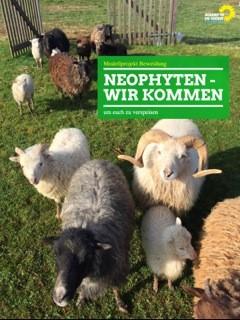 Gegen Springkraut & Co. : Uferbeweidung durch Schafe